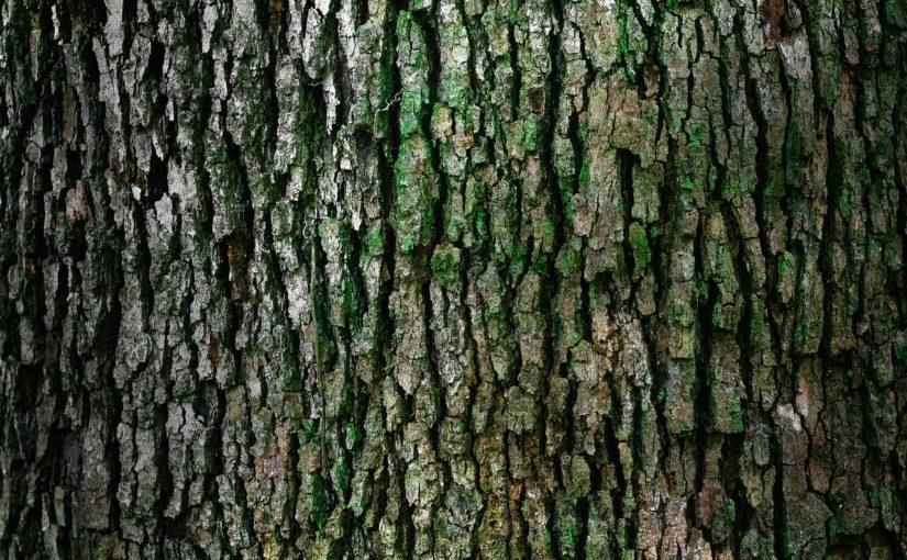 Prześliczny i {zadbany zieleniec to nie lada wyzwanie, szczególnie jak jego konserwacją zajmujemy się sami.